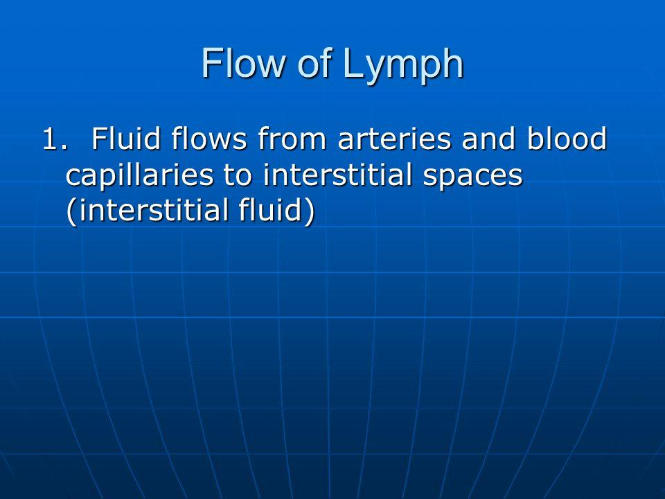 Flow of Lymph 1.