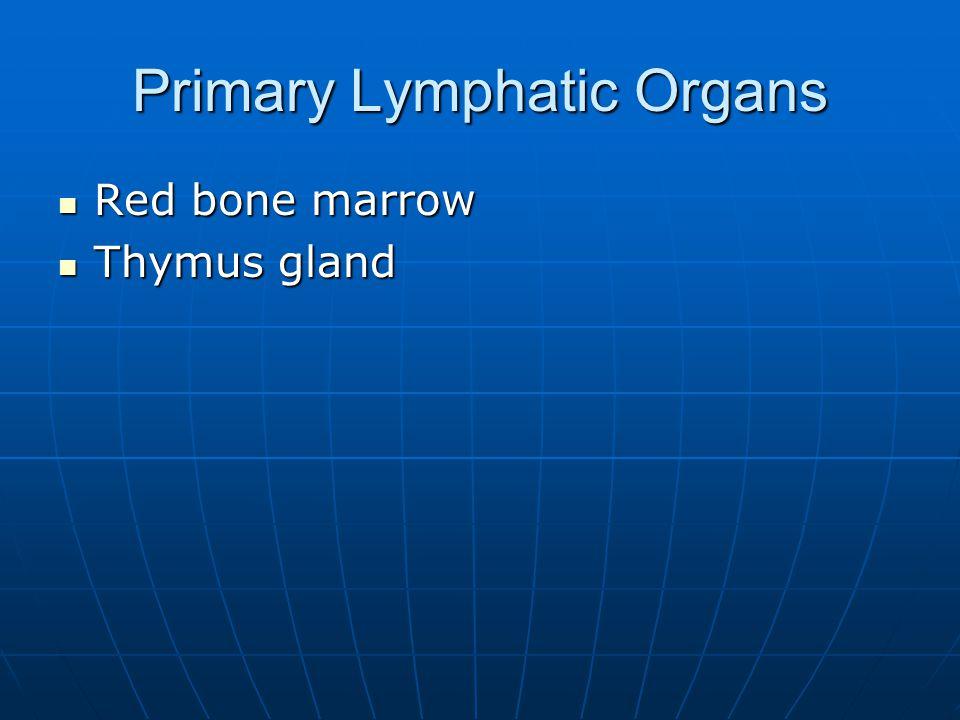 Primary Lymphatic Organs