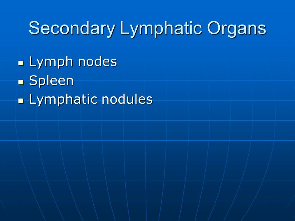 Secondary Lymphatic Organs