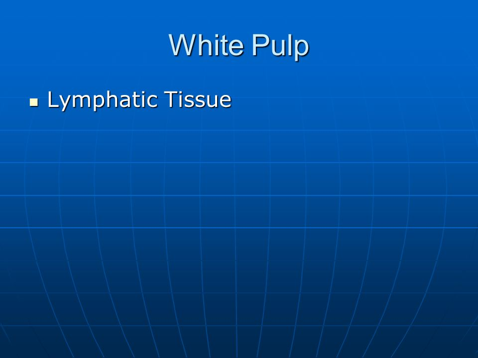 White Pulp Lymphatic Tissue