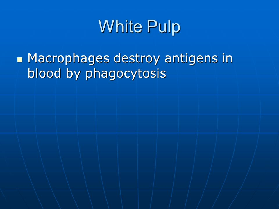 White Pulp Macrophages destroy antigens in blood by phagocytosis