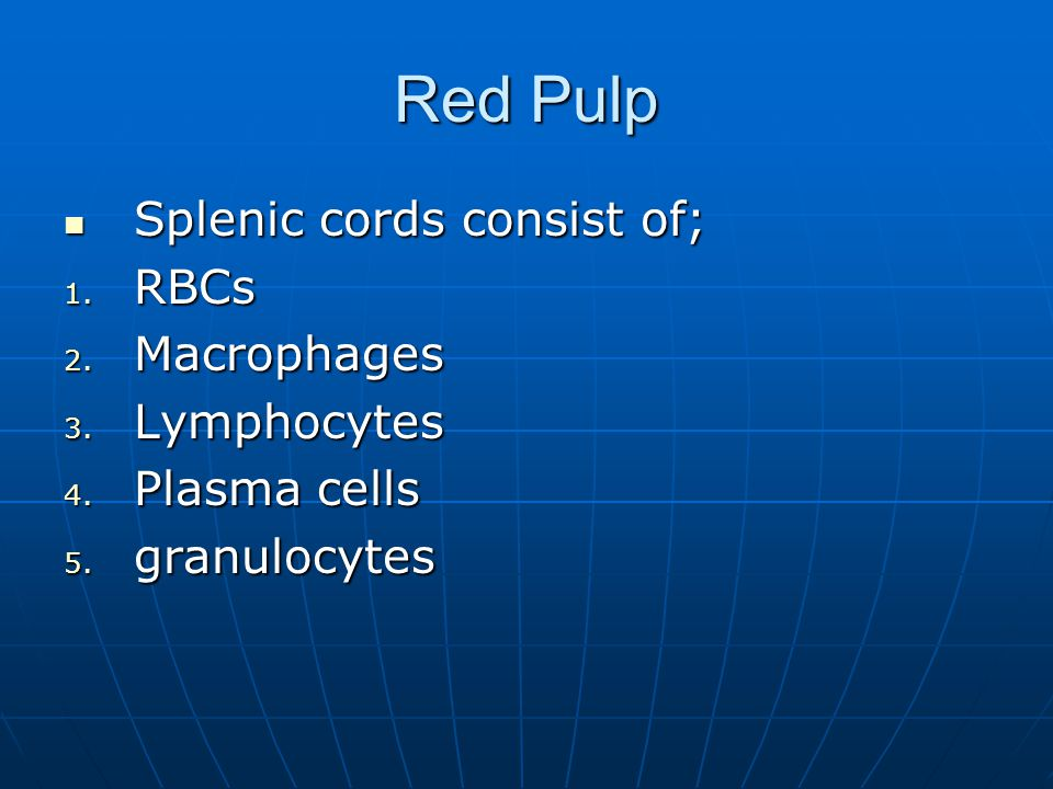 Red Pulp Splenic cords consist of; RBCs Macrophages Lymphocytes