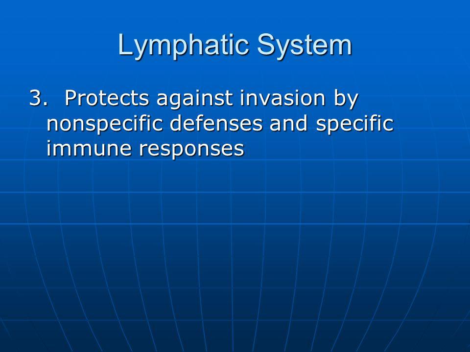Lymphatic System 3.
