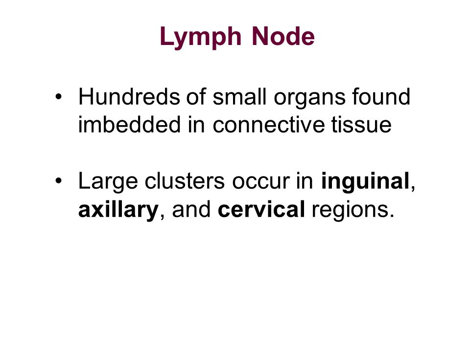 Lymph Node Hundreds of small organs found imbedded in connective tissue.