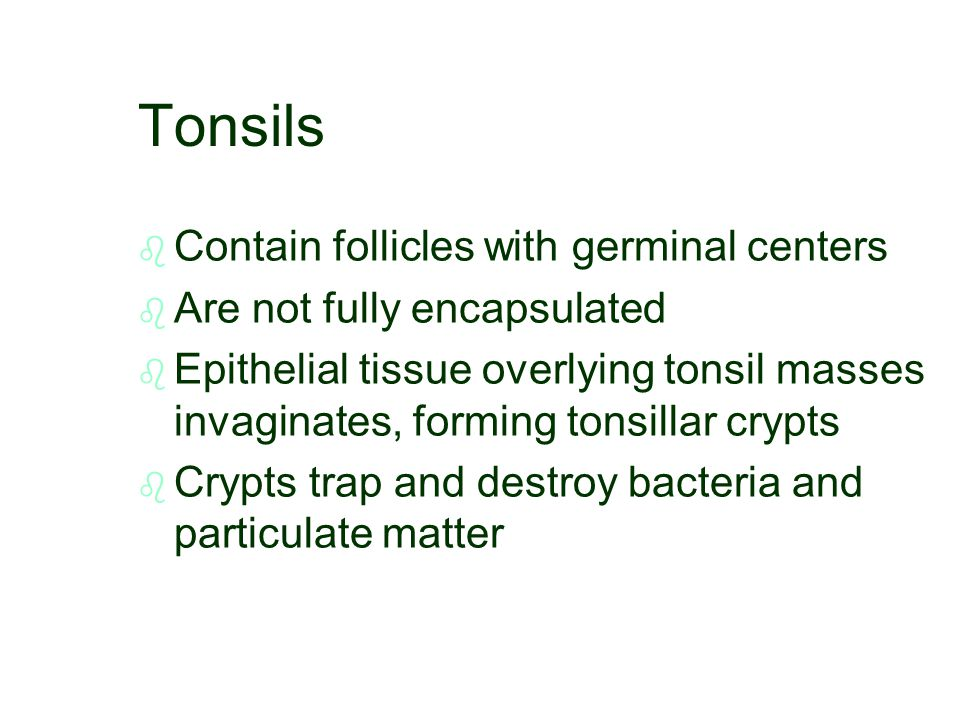 Tonsils Contain follicles with germinal centers