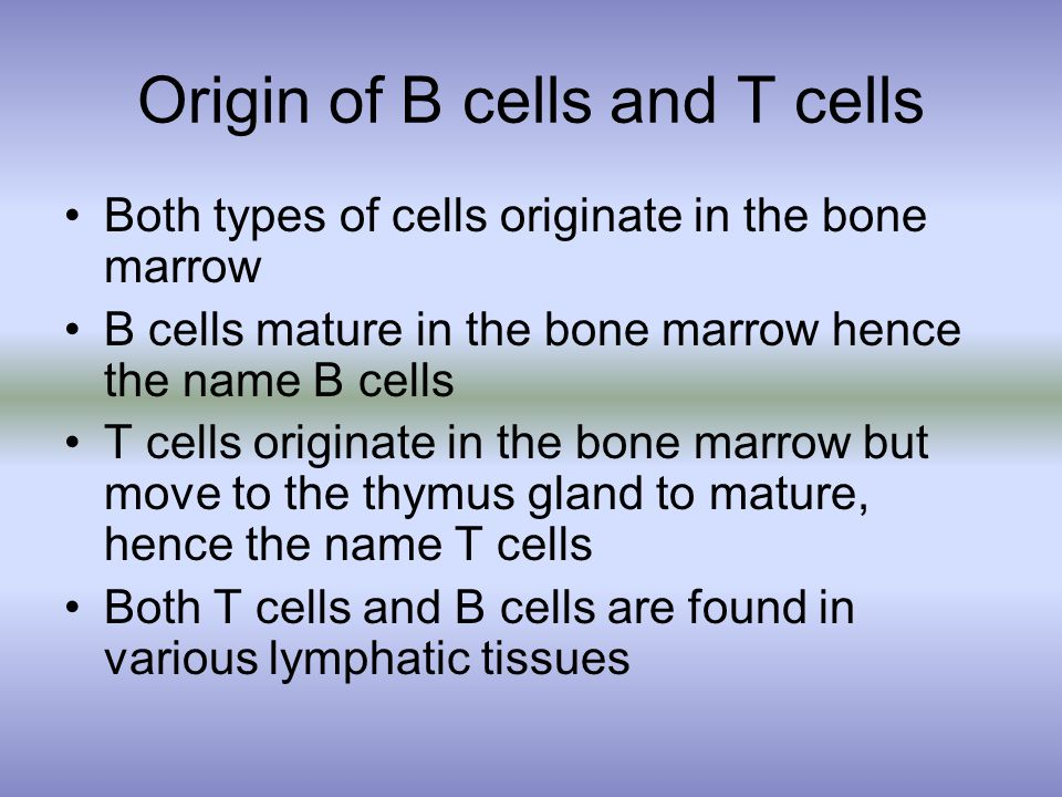 Origin of B cells and T cells