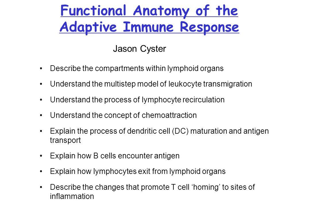 Functional Anatomy of the Adaptive Immune Response