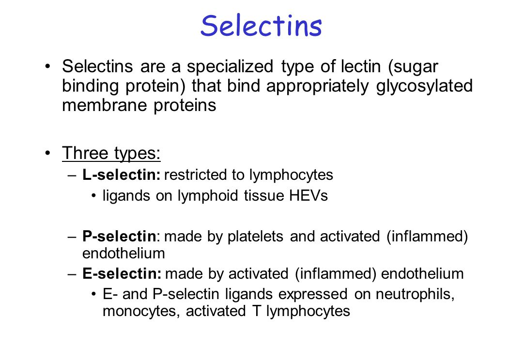 Selectins Selectins are a specialized type of lectin (sugar binding protein) that bind appropriately glycosylated membrane proteins.