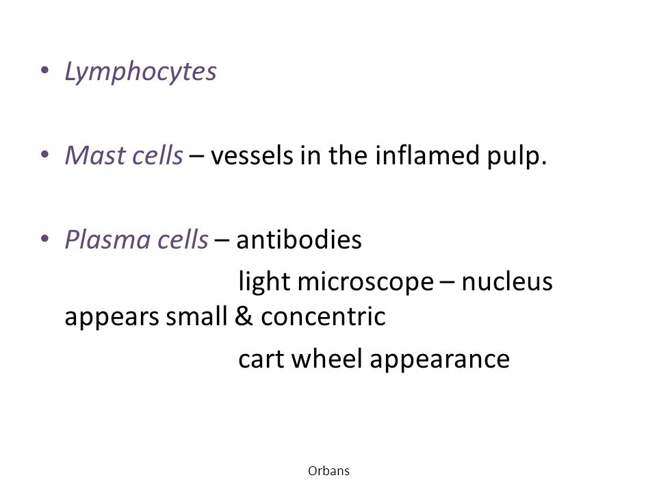 Mast cells – vessels in the inflamed pulp. Plasma cells – antibodies