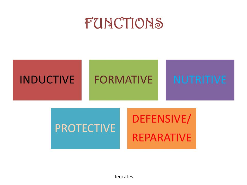 FUNCTIONS Tencates INDUCTIVE FORMATIVE NUTRITIVE PROTECTIVE REPARATIVE