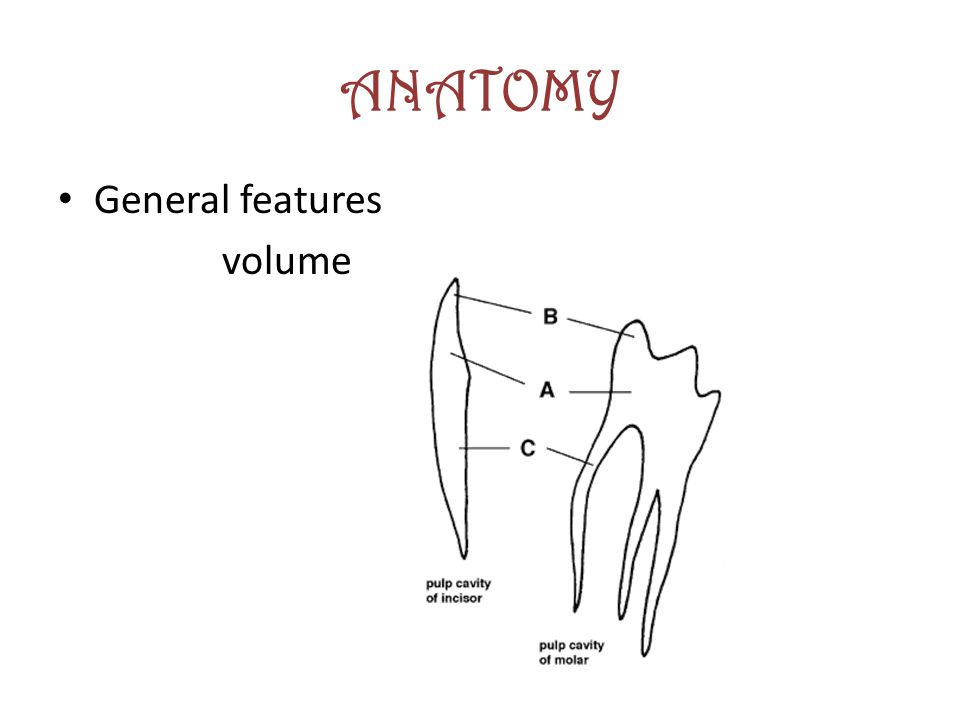ANATOMY General features volume