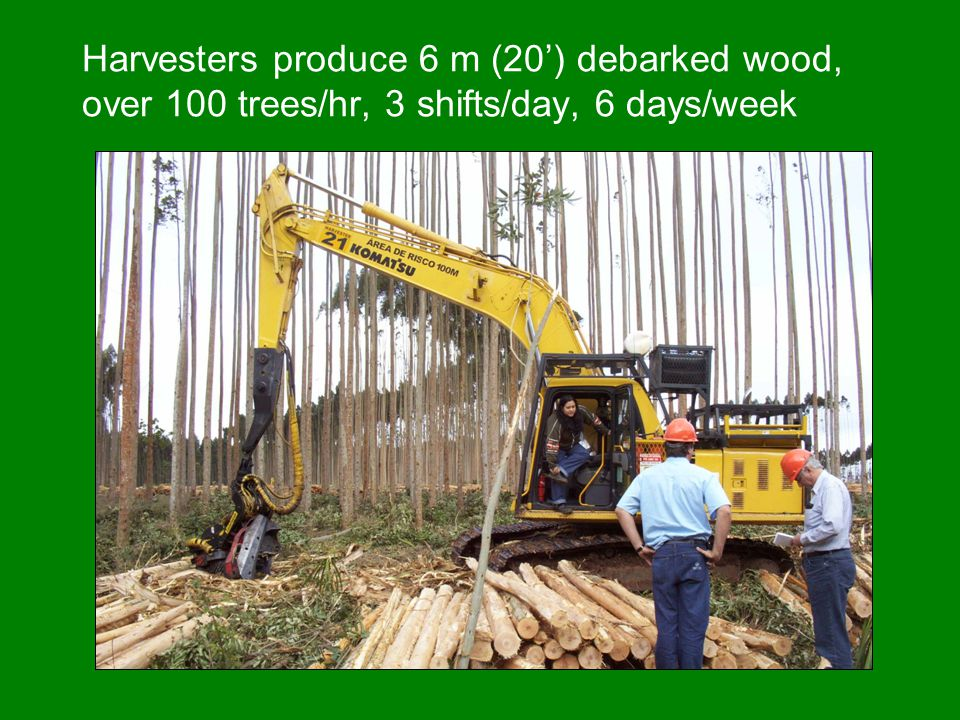 Harvesters produce 6 m (20') debarked wood, over 100 trees/hr, 3 shifts/day, 6 days/week
