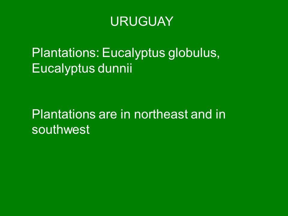URUGUAY Plantations: Eucalyptus globulus, Eucalyptus dunnii.