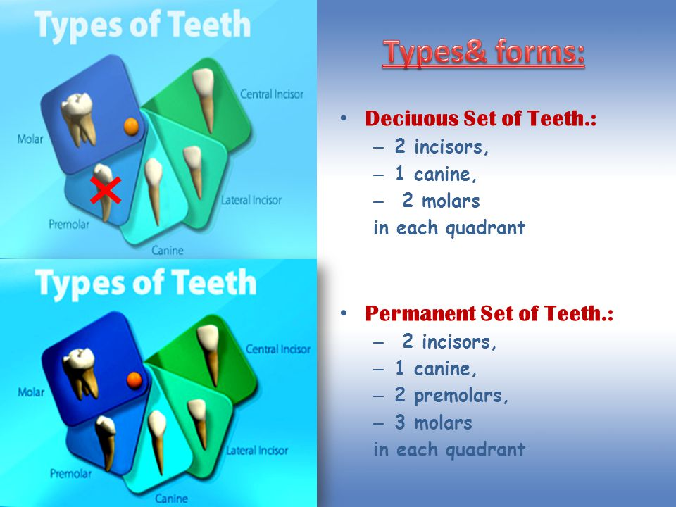Types& forms: Deciuous Set of Teeth.: Permanent Set of Teeth.: