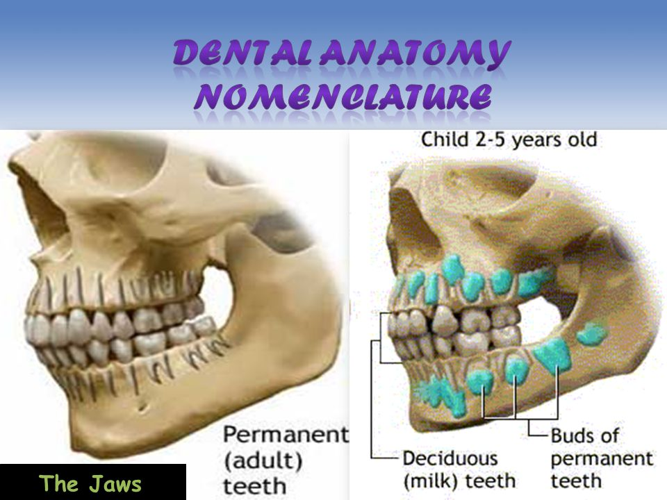 Dental Anatomy Nomenclature