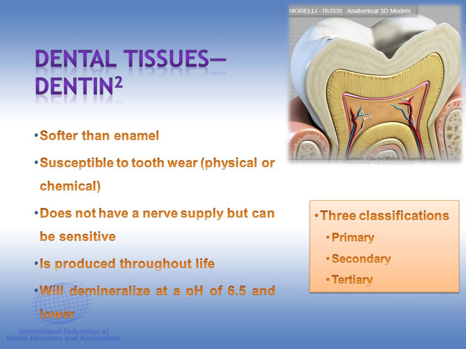 Dental Tissues—Dentin2