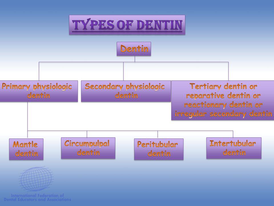 Secondary physiologic irregular secondary dentin