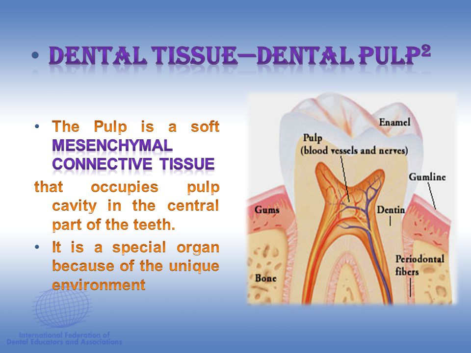 Dental Tissue—Dental Pulp2