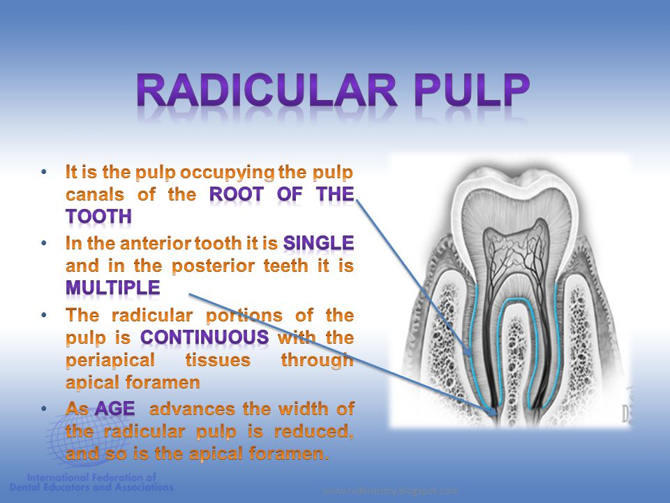 RADICULAR PULP It is the pulp occupying the pulp canals of the root of the tooth.