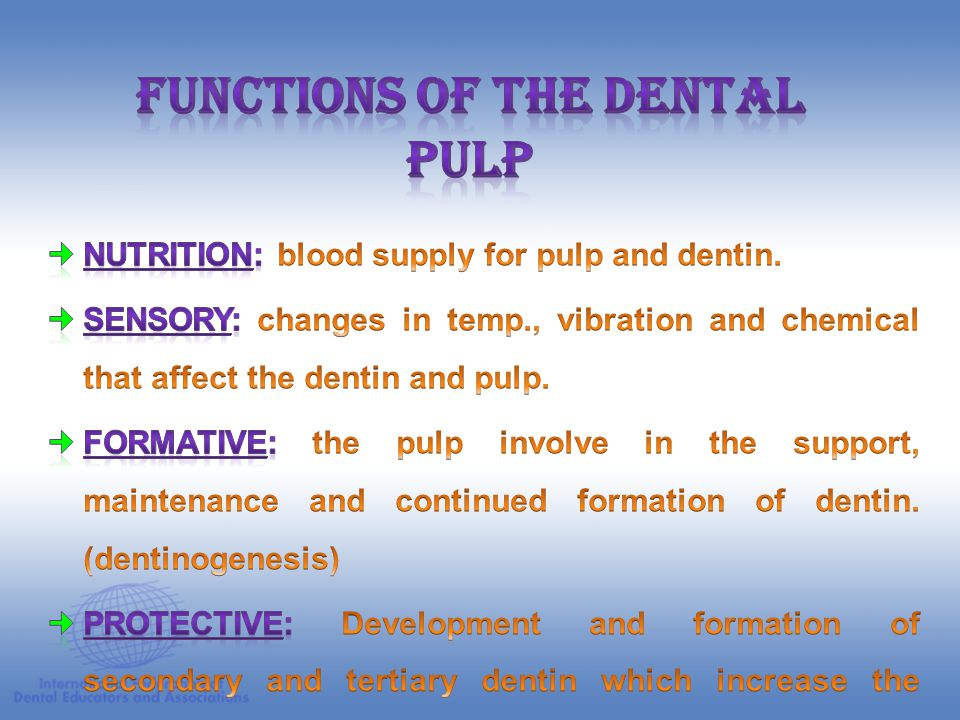 Functions of the Dental Pulp