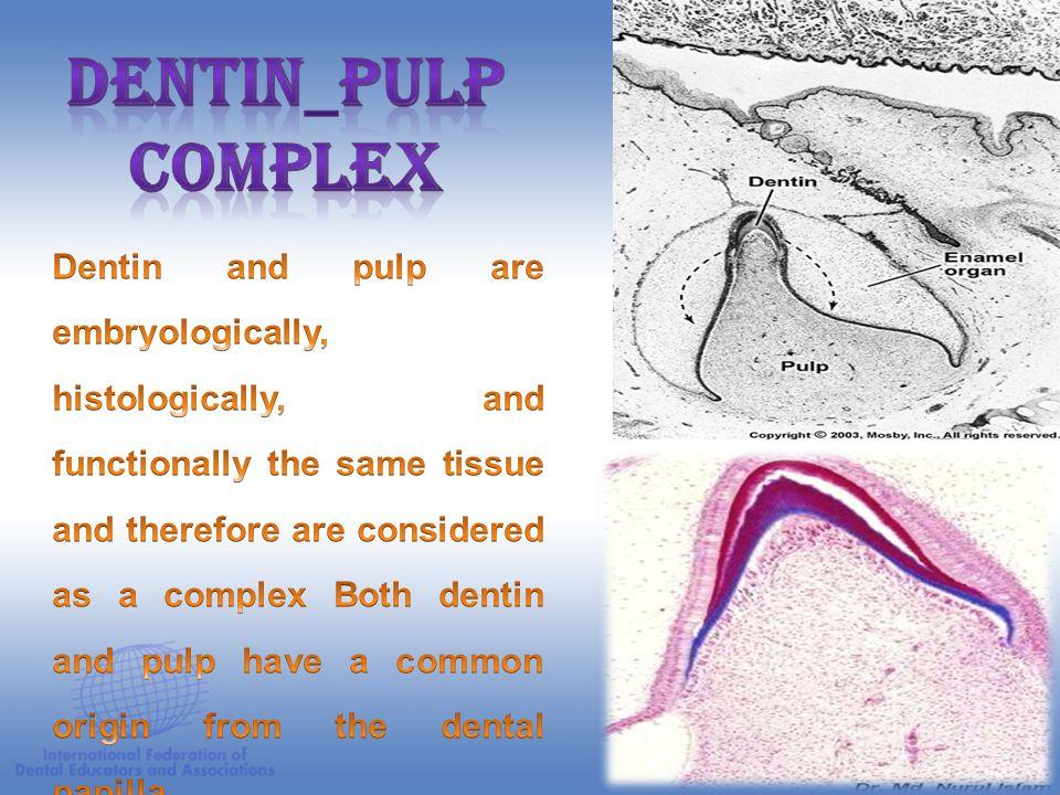Dentin_pulp complex