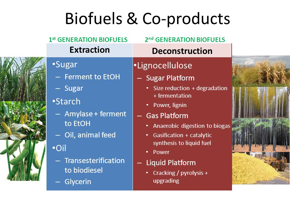 Biofuels & Co-products