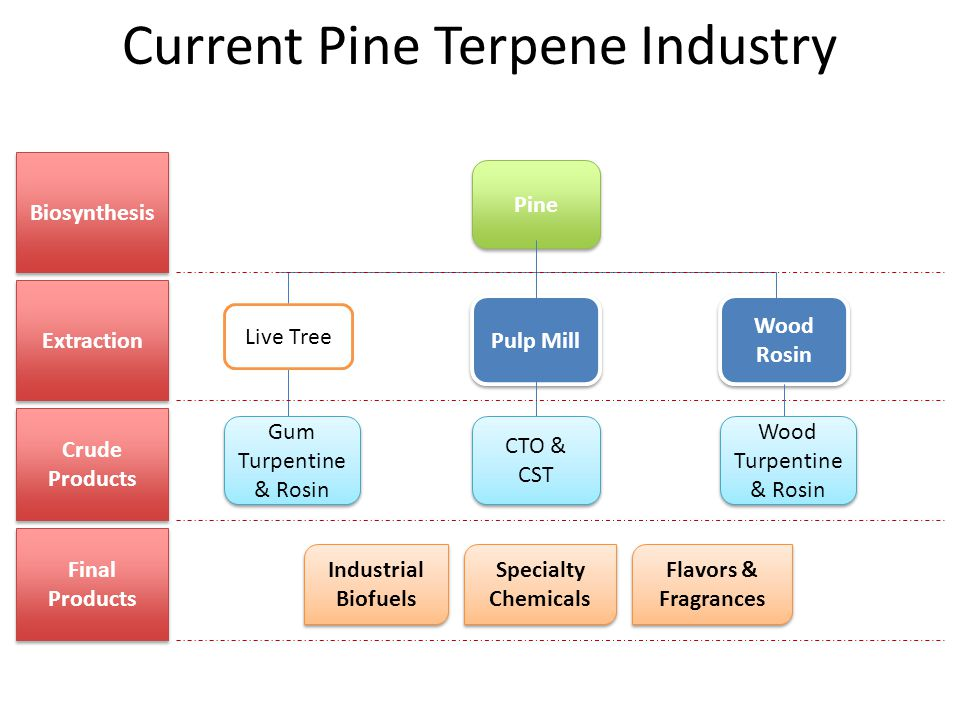 Current Pine Terpene Industry