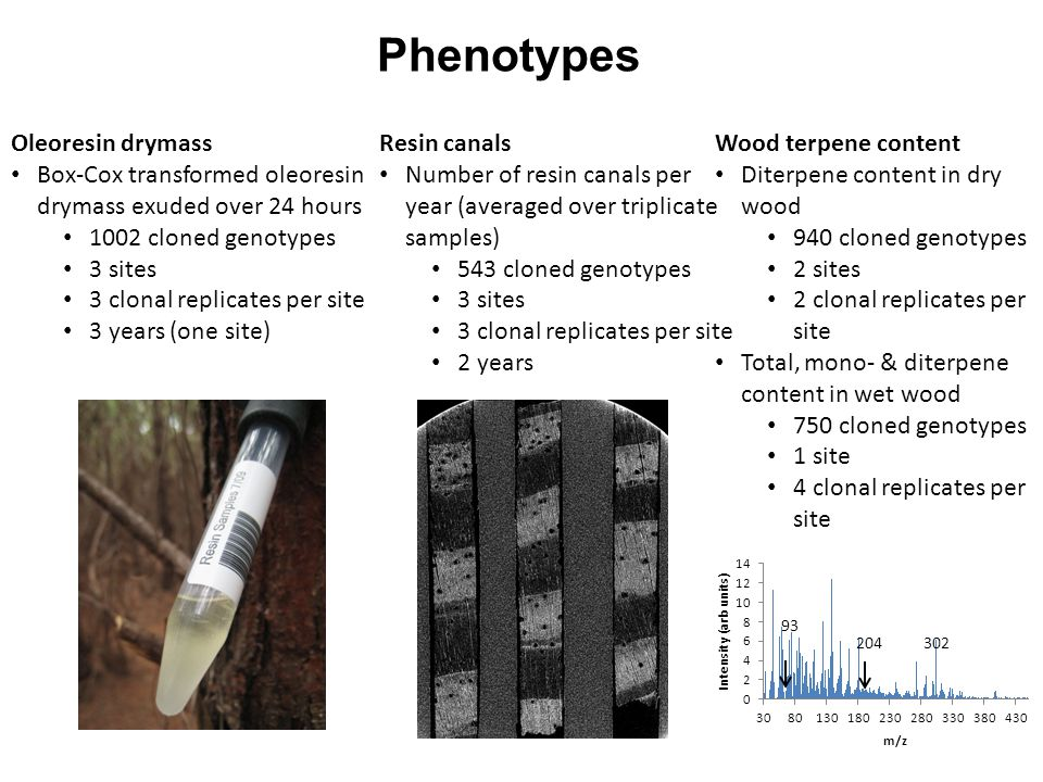 Phenotypes Oleoresin drymass