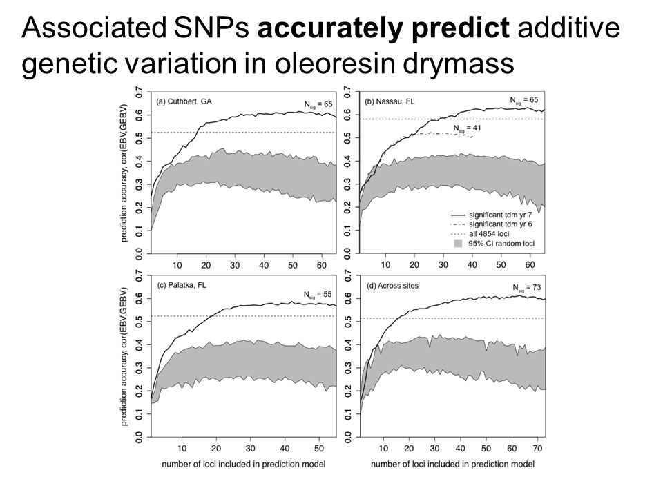 Associated SNPs accurately predict additive genetic variation in oleoresin drymass