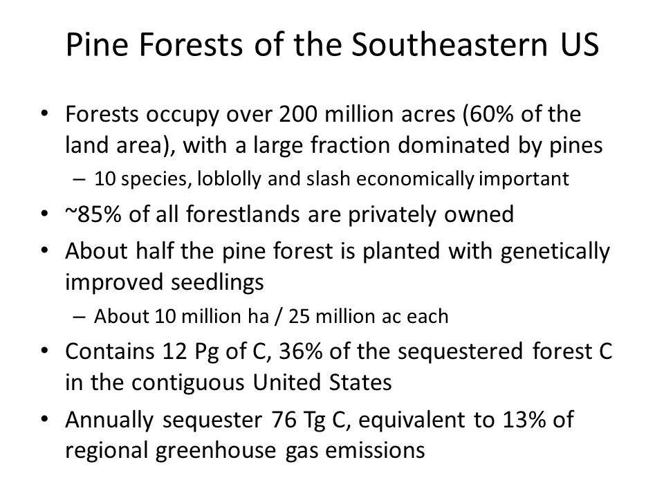 Pine Forests of the Southeastern US
