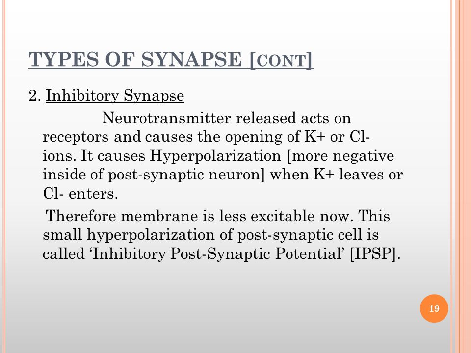 TYPES OF SYNAPSE [cont]