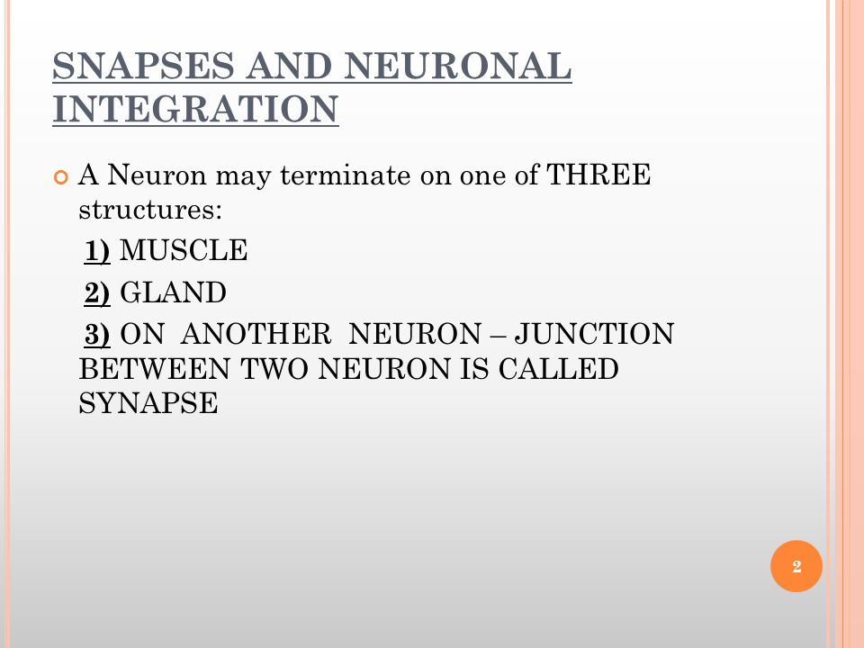 SNAPSES AND NEURONAL INTEGRATION