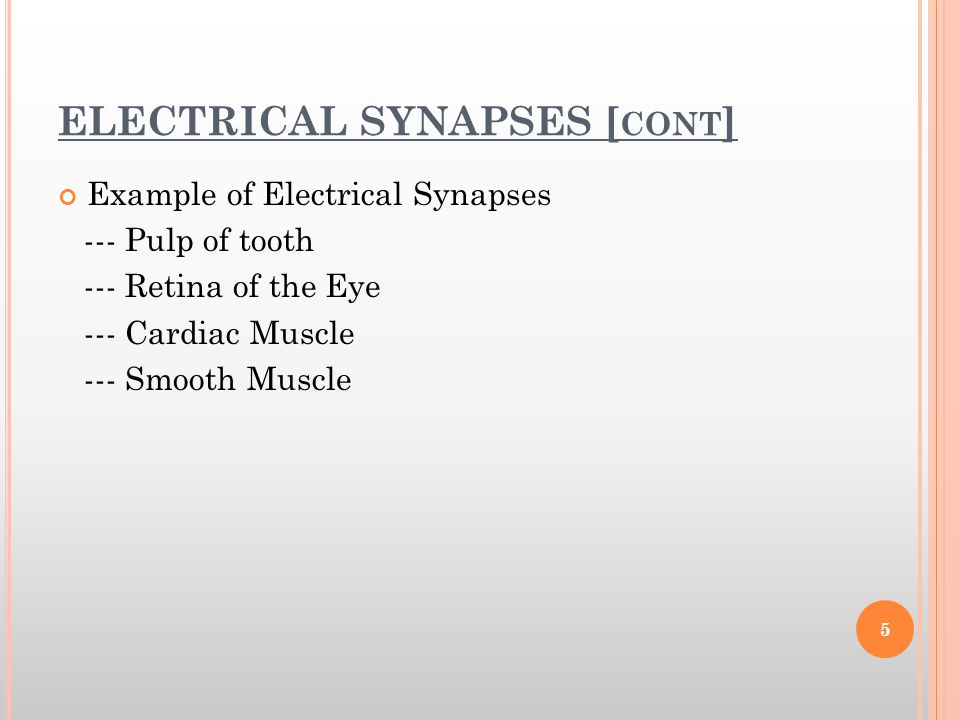 ELECTRICAL SYNAPSES [cont]