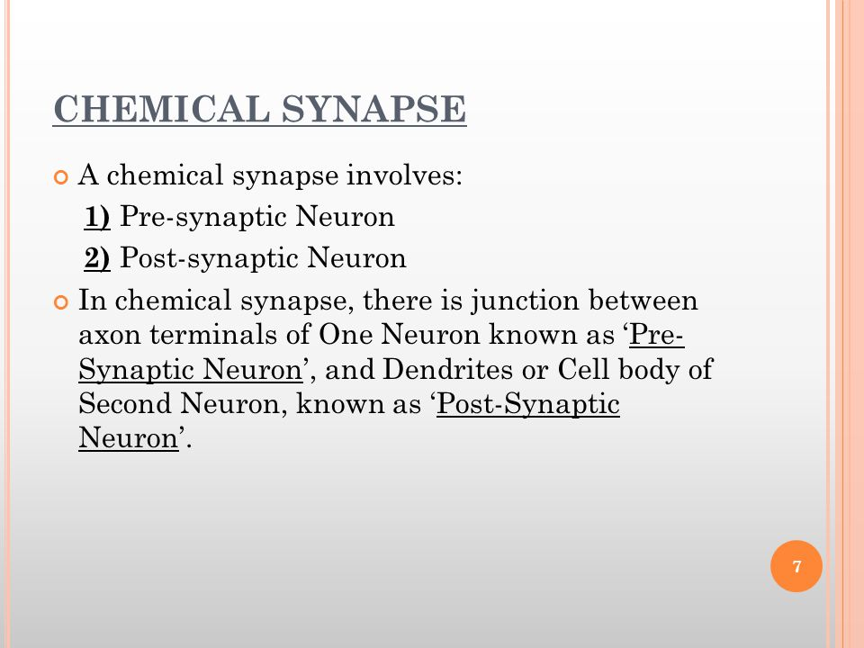 CHEMICAL SYNAPSE A chemical synapse involves: 1) Pre-synaptic Neuron