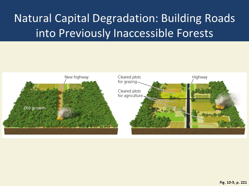 Natural Capital Degradation: Building Roads into Previously Inaccessible Forests