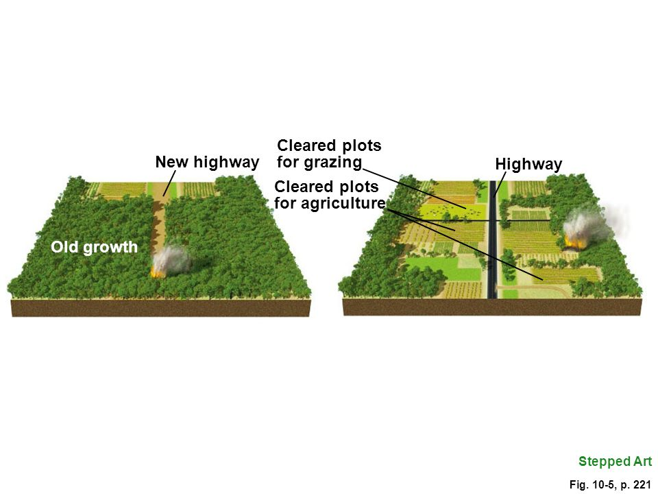 for grazing New highway Highway Cleared plots for agriculture