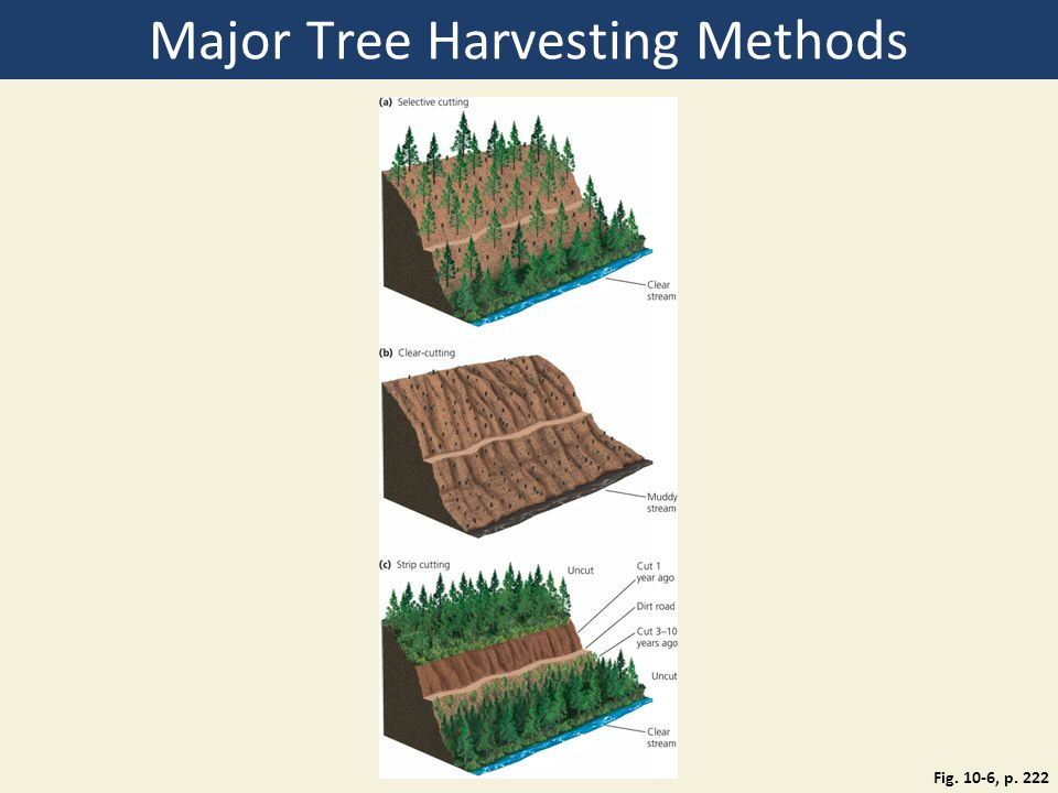Major Tree Harvesting Methods