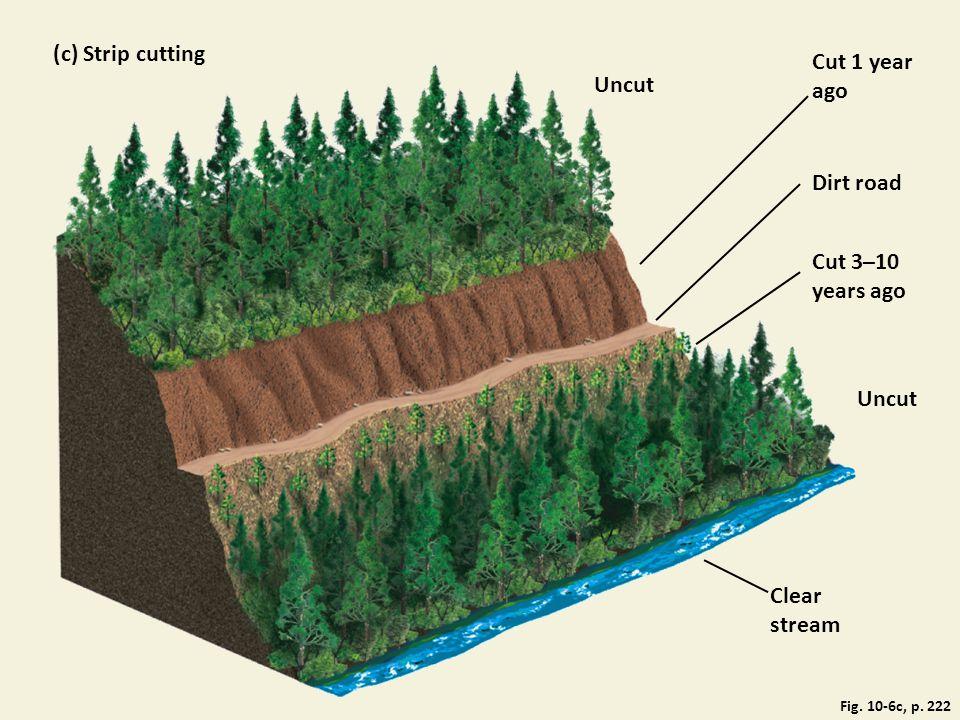 (c) Strip cutting Cut 1 year ago Uncut Dirt road Cut 3–10 years ago