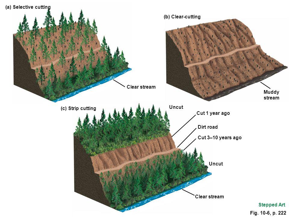 (a) Selective cutting (c) Strip cutting. Clear stream. (b) Clear-cutting. Muddy stream. Uncut. Cut 1 year ago.