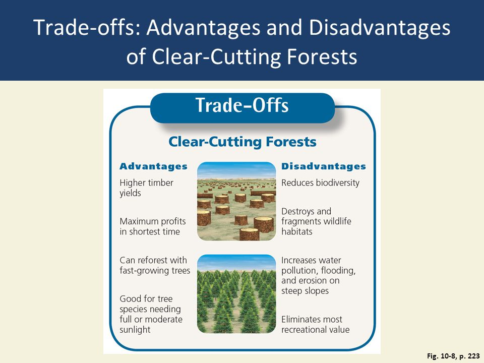 Trade-offs: Advantages and Disadvantages of Clear-Cutting Forests