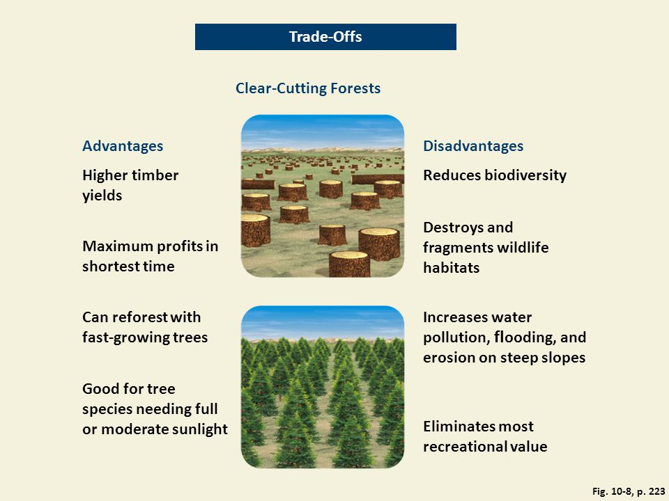 Clear-Cutting Forests