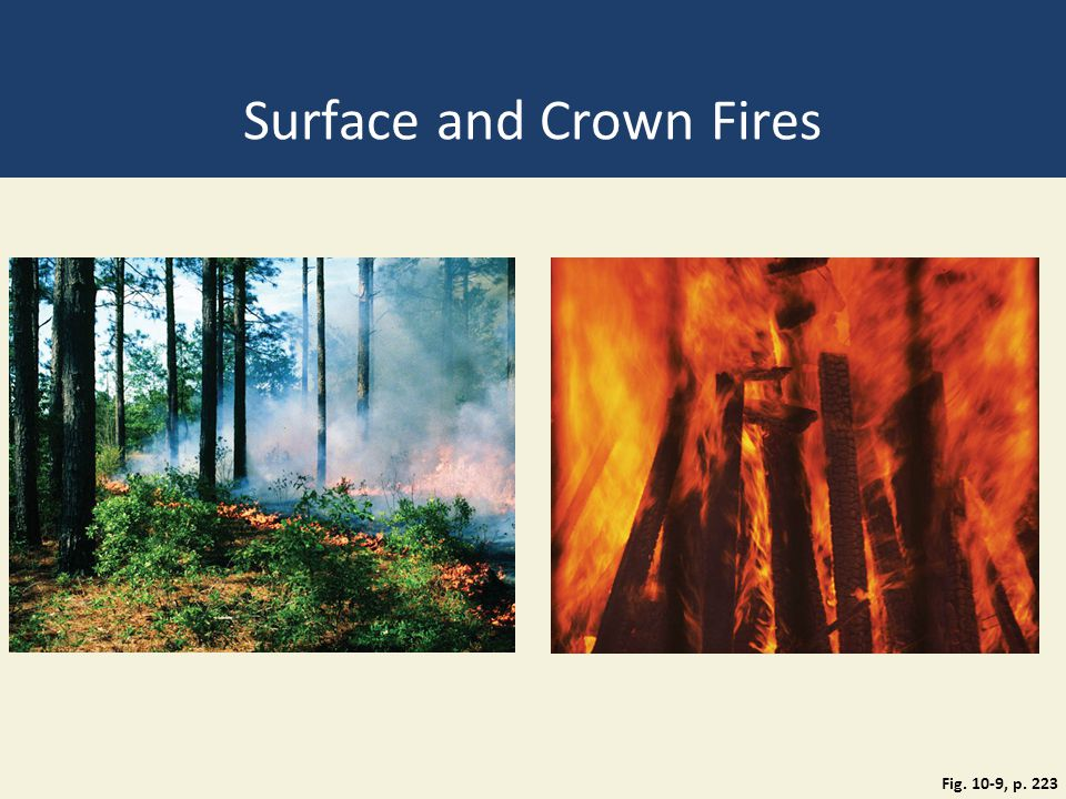Surface and Crown Fires