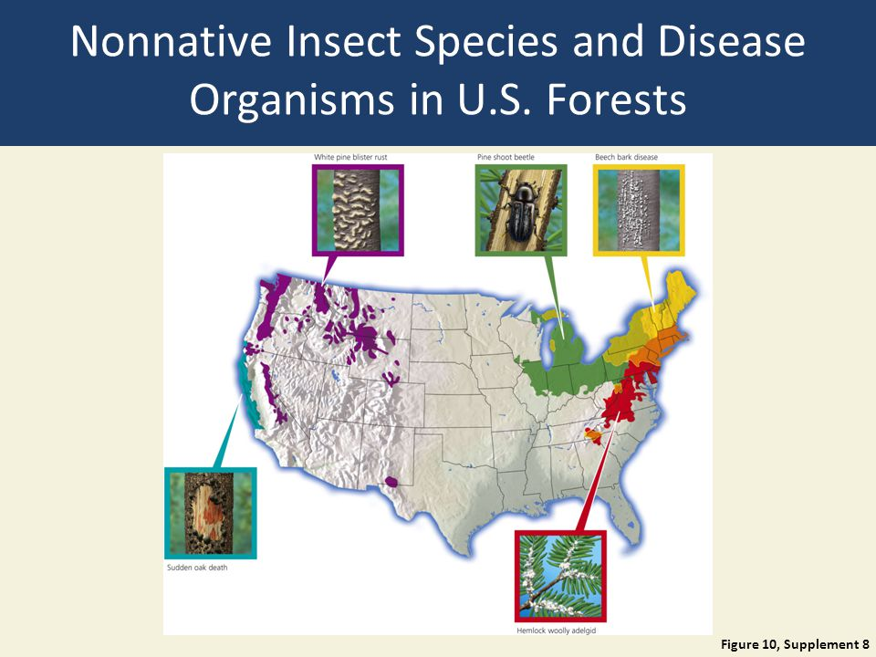 Nonnative Insect Species and Disease Organisms in U.S. Forests