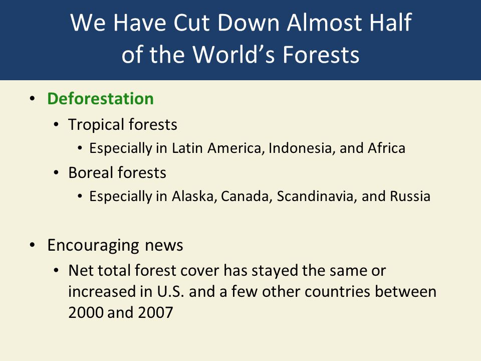 We Have Cut Down Almost Half of the World's Forests