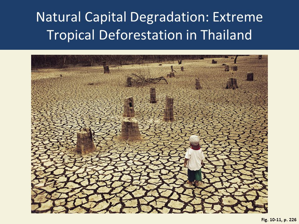 Natural Capital Degradation: Extreme Tropical Deforestation in Thailand