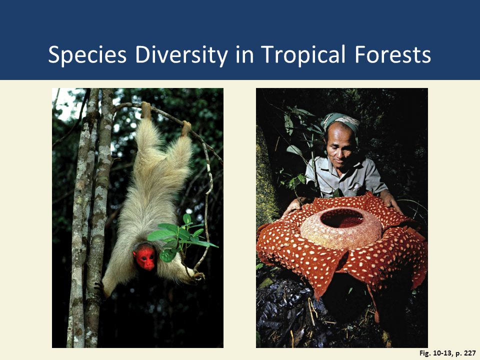 Species Diversity in Tropical Forests
