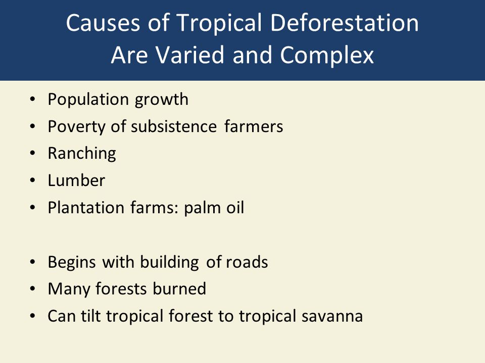 Causes of Tropical Deforestation Are Varied and Complex