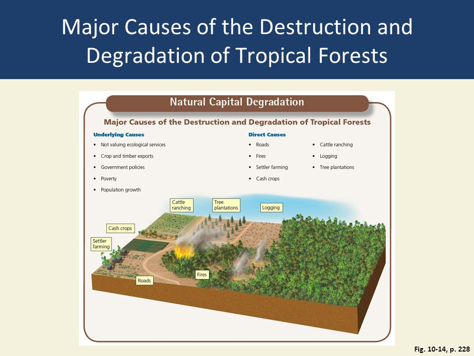 Major Causes of the Destruction and Degradation of Tropical Forests