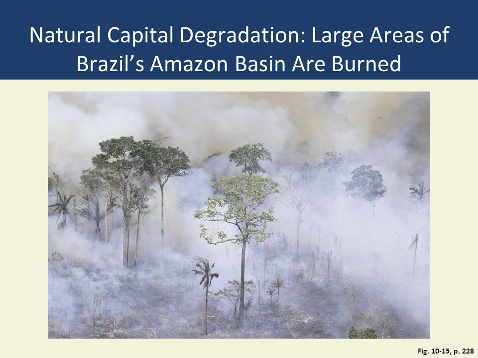 Natural Capital Degradation: Large Areas of Brazil's Amazon Basin Are Burned