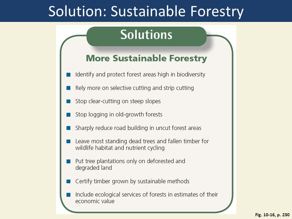 Solution: Sustainable Forestry